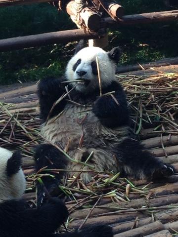 Chengdu, China, The Dragon Trip
