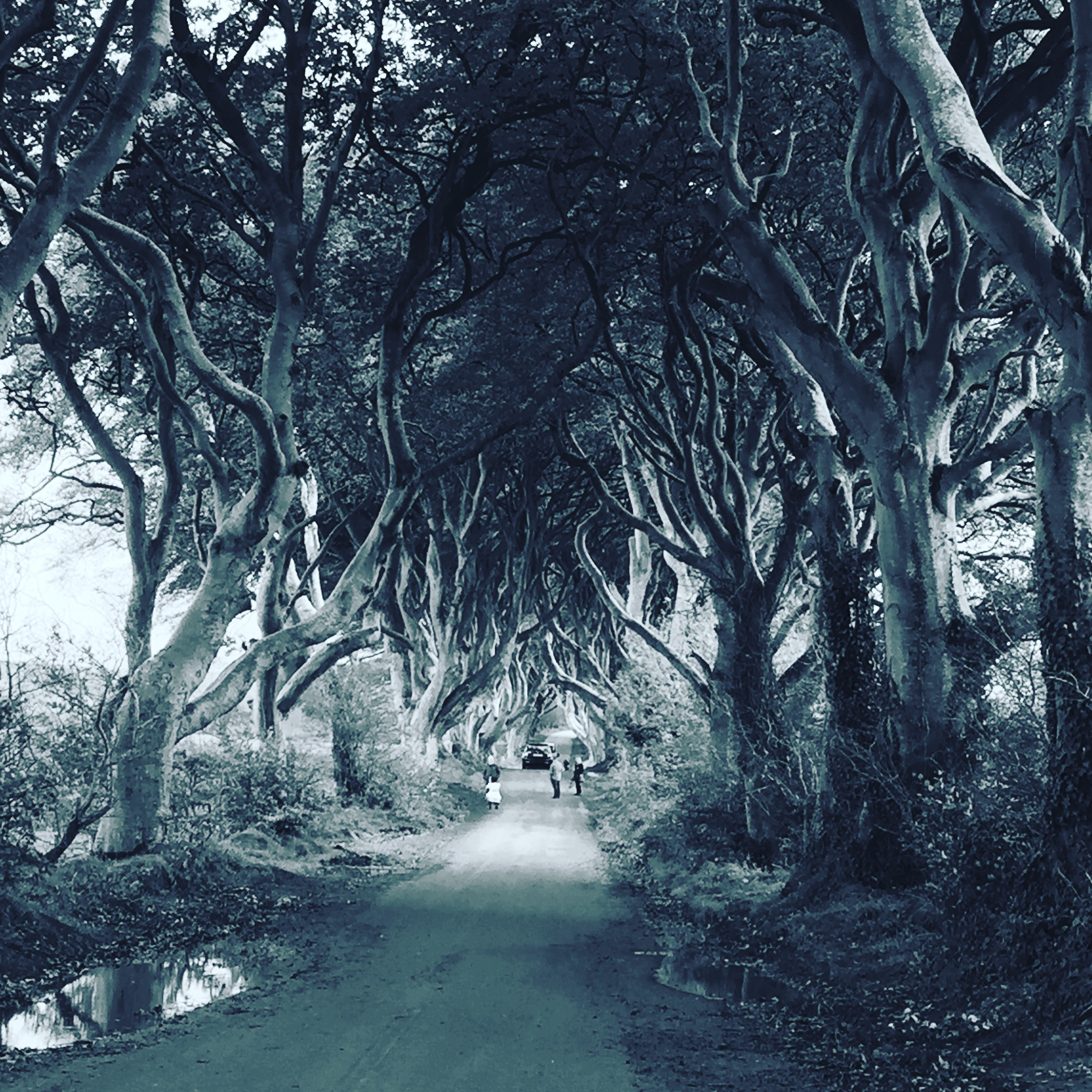 Game of Thrones, Kings Road, Dark Hedges, Ireland, Travel