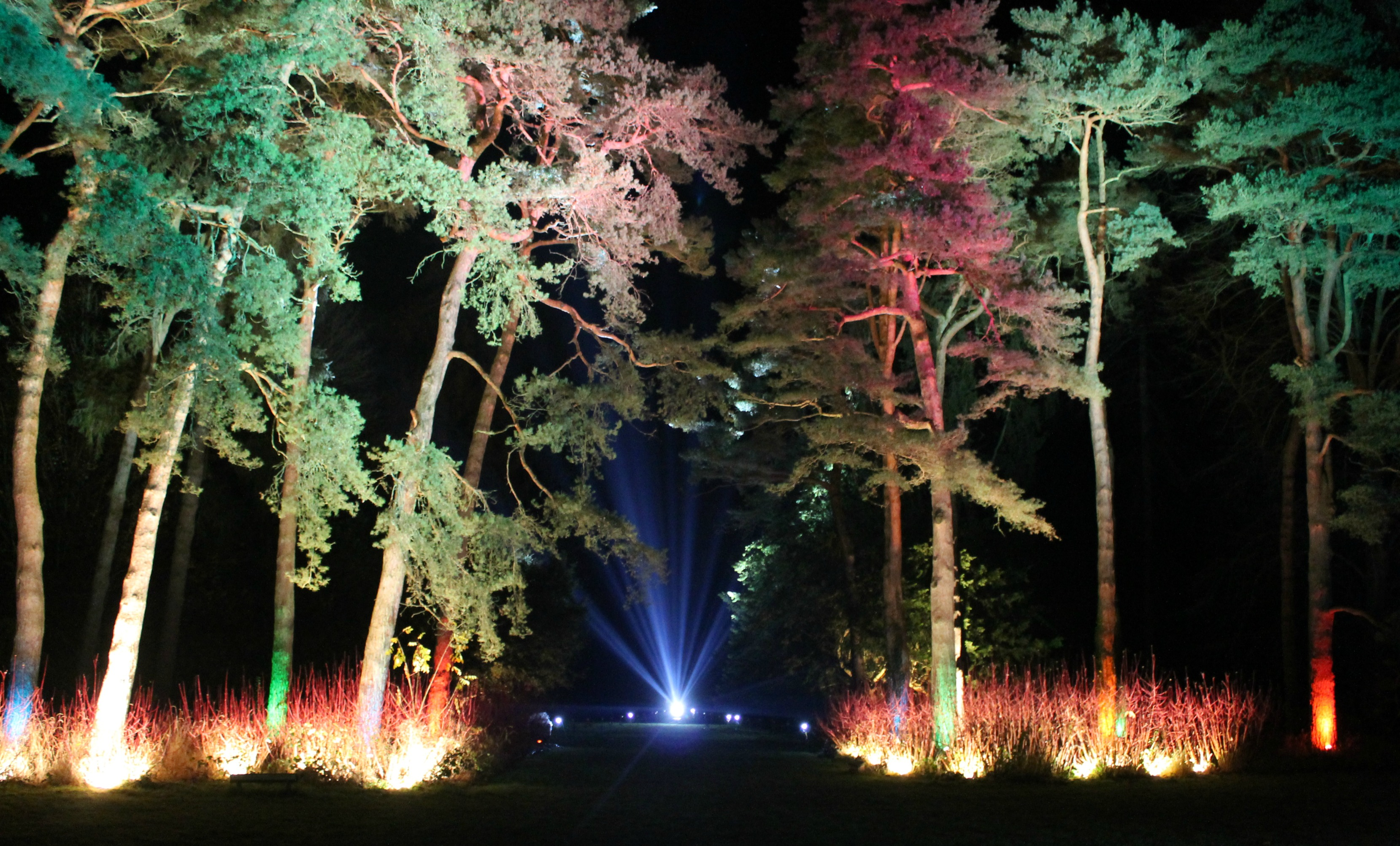 Winter Day Trips: Westonbirt Arboretum Enchanted Christmas